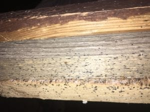 Are Bed Bug Eggs Visible in Kansas City